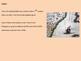 Elephant Bird - Power Point - History Facts Information Ex