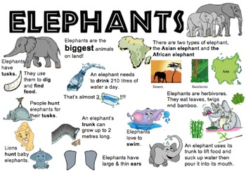 Elephant Information Report Visual