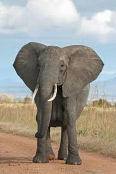 Elephant Informational Brochure