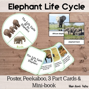 Elephant Life Cycle With Real Photos Preschool Science Montessorilove