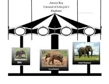 Elephant Lifecycle