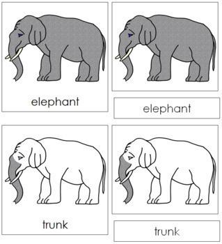 Elephant Nomenclature Cards