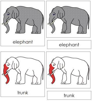 Elephant Nomenclature Cards (Red)