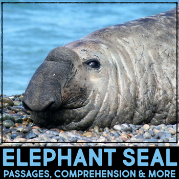 Elephant Seal: Informational Article, QR Code Research & Fact Sort