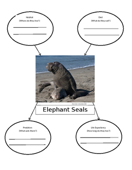 Elephant Seal Research Graphic Organizer