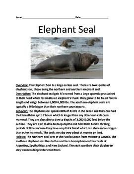 Elephant Seal - Review Article Lesson - Information facts questions vocabulary