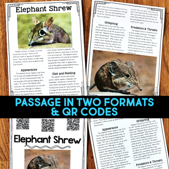 Elephant Shrew: Informational Article, QR Code Research & Fact Sort