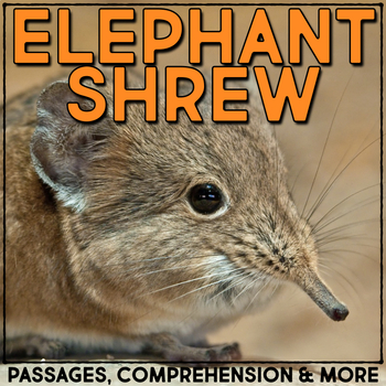 Elephant Shrew: Informational Article, QR Code Research &