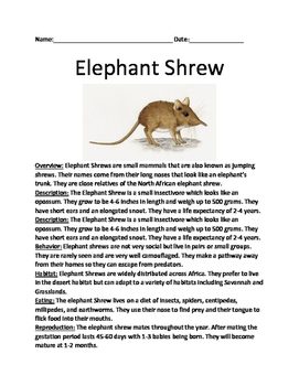Elephant Shrew - review article lesson with questions and vocabulary
