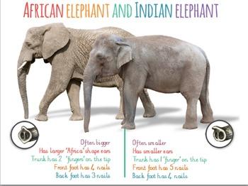 Elephant Slideshow (powerpoint)