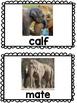 Elephants CLOSE READ