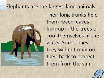Elephants PowerPoint - Fun Facts
