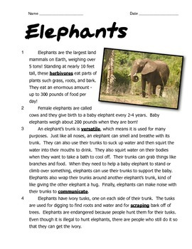 Elephants: Reading and Math