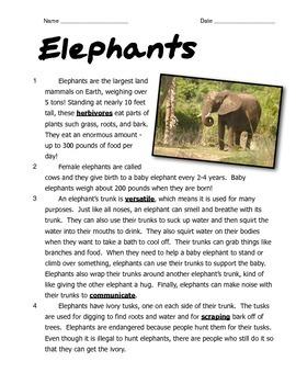 Elephants: Reading and Math