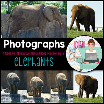 Elephants Stock Photos - Photographs
