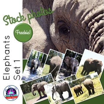 Elephants Stock Photos (Set 1)