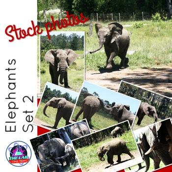 Elephants Stock Photos (Set 2)