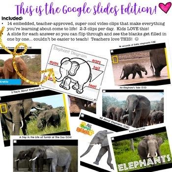 Elephants ...  Zoo Animal Research Mixed w/ Authentic Literacy Practice!