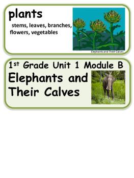 ReadyGen Elephants and Their Calves Vocabulary / 1st grade Unit 1, Module B