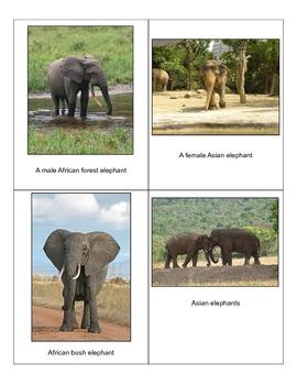 Elephants for Everyone