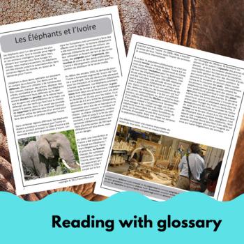 Elephants in danger - a reading for intermediate/advanced French learners