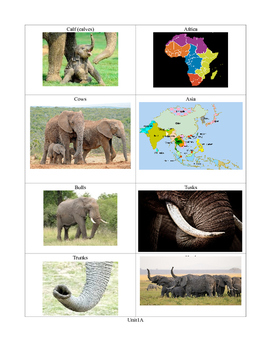 Elephat Vocabulary Picture Supports 1A First grade