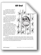 Elf Owl/El búho enano