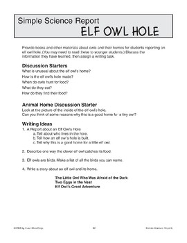 Elf Owl Hole