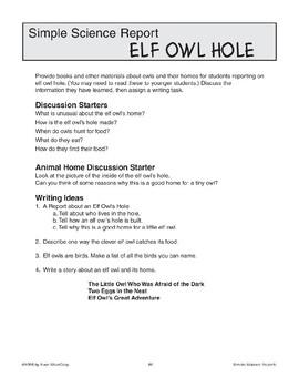 Elf Owl Hole