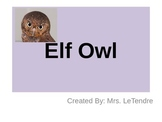 Elf Owl PowerPoint