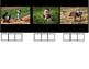 Elkonin Boxes, Short i , Digital Word Making - Phoneme Segmentation in Seesaw