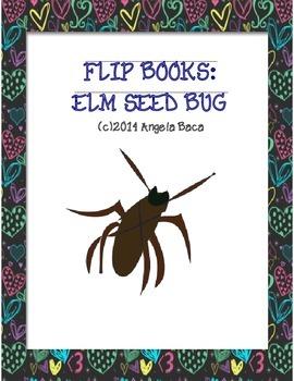Elm Seed Bug, an Emergent Reader