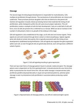 Embryo Development in Animals Handout