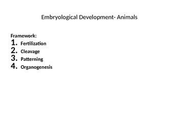 Embryo Development in Animals PowerPoint