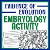 Evidence of Evolution Embryology Activity with Worksheet N