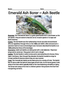 Emerald Ash Borer - Ash Beetle invasive species lesson questions vocabulary