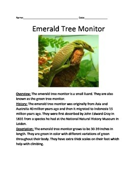 Emerald Tree Monitor - Lizard Informational Lesson Article Questions Vocab Facts