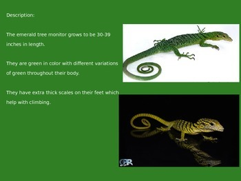 Emerald Tree Monitor - Lizard - Power Point - information facts pictures