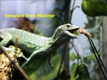 Emerald Tree Monitor - Lizard - Power Point - information