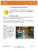 Emergency Sub Plans: First Grade: ELA Informational: Chrysanthemums
