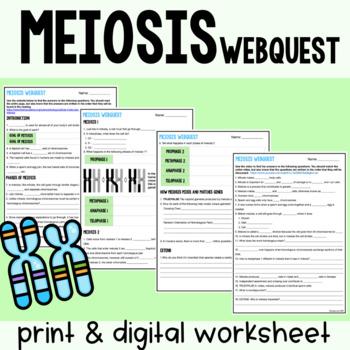 Emergency Sub Plans: Meiosis Webquest