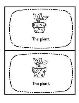 Emergent Book-Plant