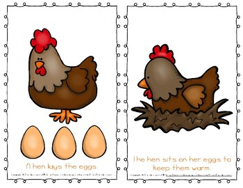 """Emergent Easy Reader Book: """"The Life Cycle of a Chicken"""""""