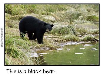 Bears Emergent Reader