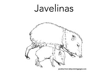 Emergent Reader Javelina for Desert Animal Unit
