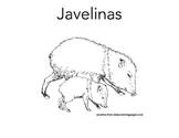 Emergent Reader Javelina for Desert Animal Unit
