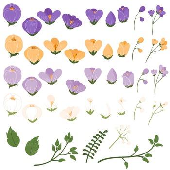 Emma Collection Floral Clipart & Vectors in Crocus - Flower Clip Art, Flowers