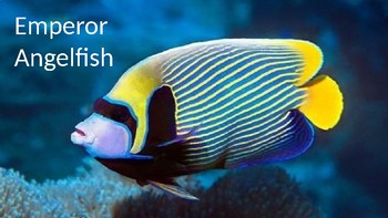 Emperor Angelfish - Power Point facts information review pictures