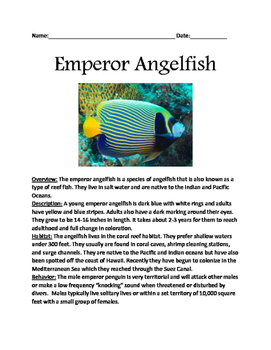 Emperor Angelfish - lesson informational article review questions word search