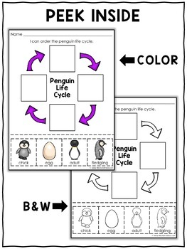 Vocabulary Activity - Emperor Penguin Life Cycle
